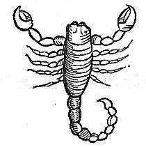 Dessin D Un Scorpion astrologie noire : scorpion